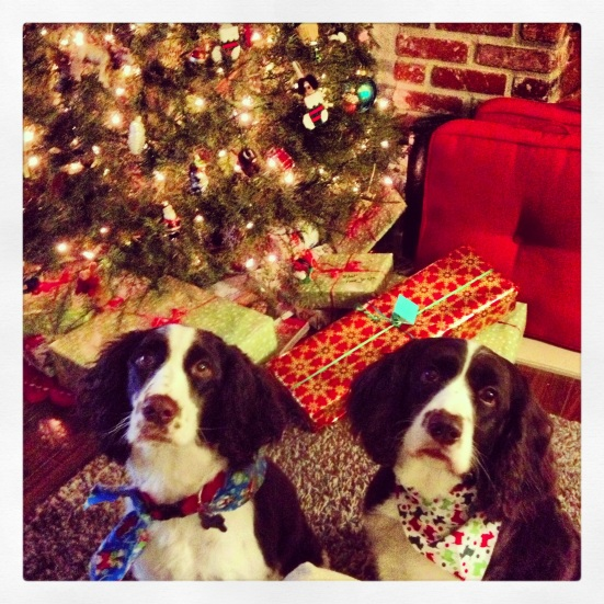 This has nothing to do with anything. But aren't these Christmas pooches ridiculous?